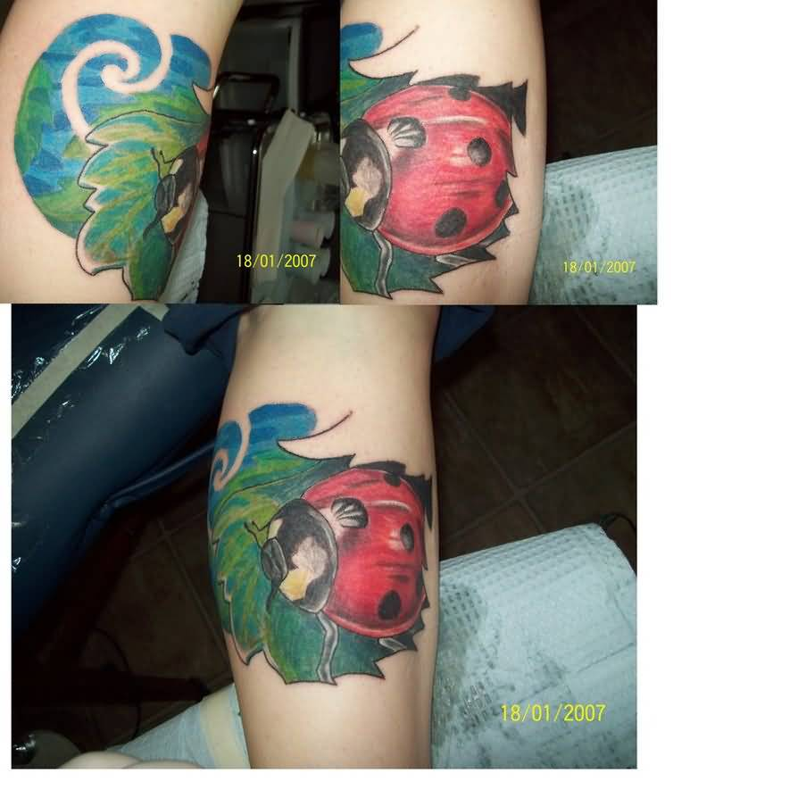 Create New Ladybug Tattoo On Arm