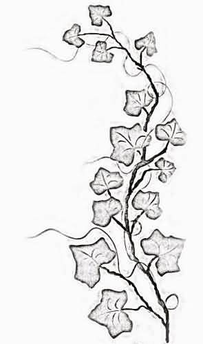 Line Drawing Vines : Poison ivy tattoo on arm tattooshunter
