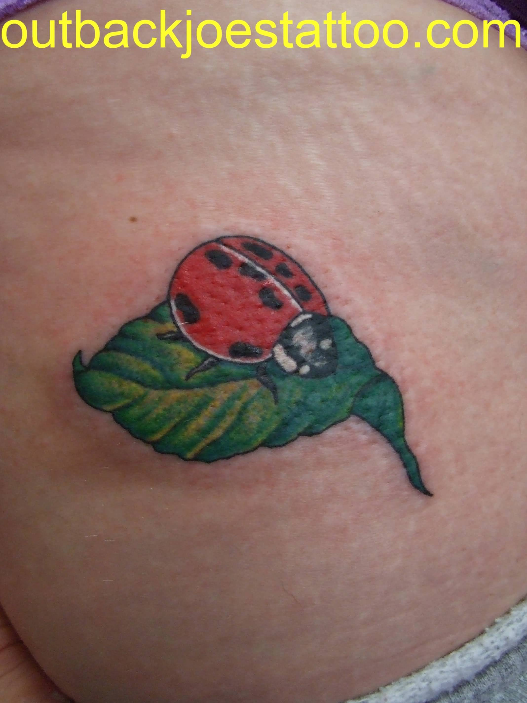 Famous Ladybug Tattoo Design On Back