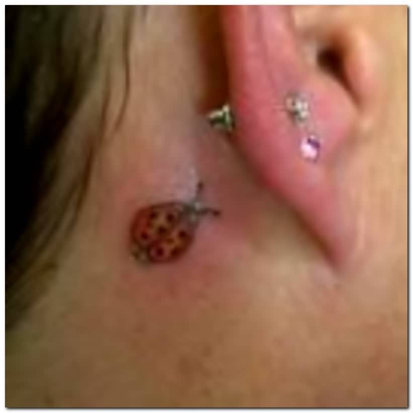 Tiny Ladybug Tattoo On Behind Ear Fabulous