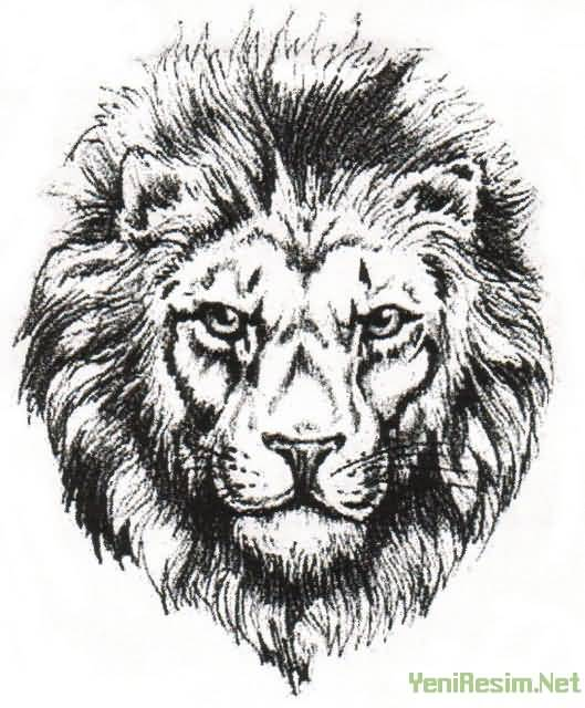 Lion Face Outline Tattoo Designs amp Ideas Page 29