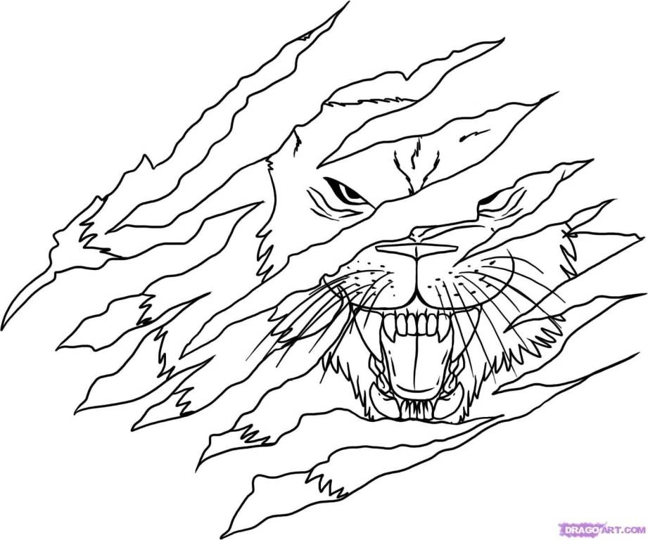 Gallery For gt Lion Claws Drawing
