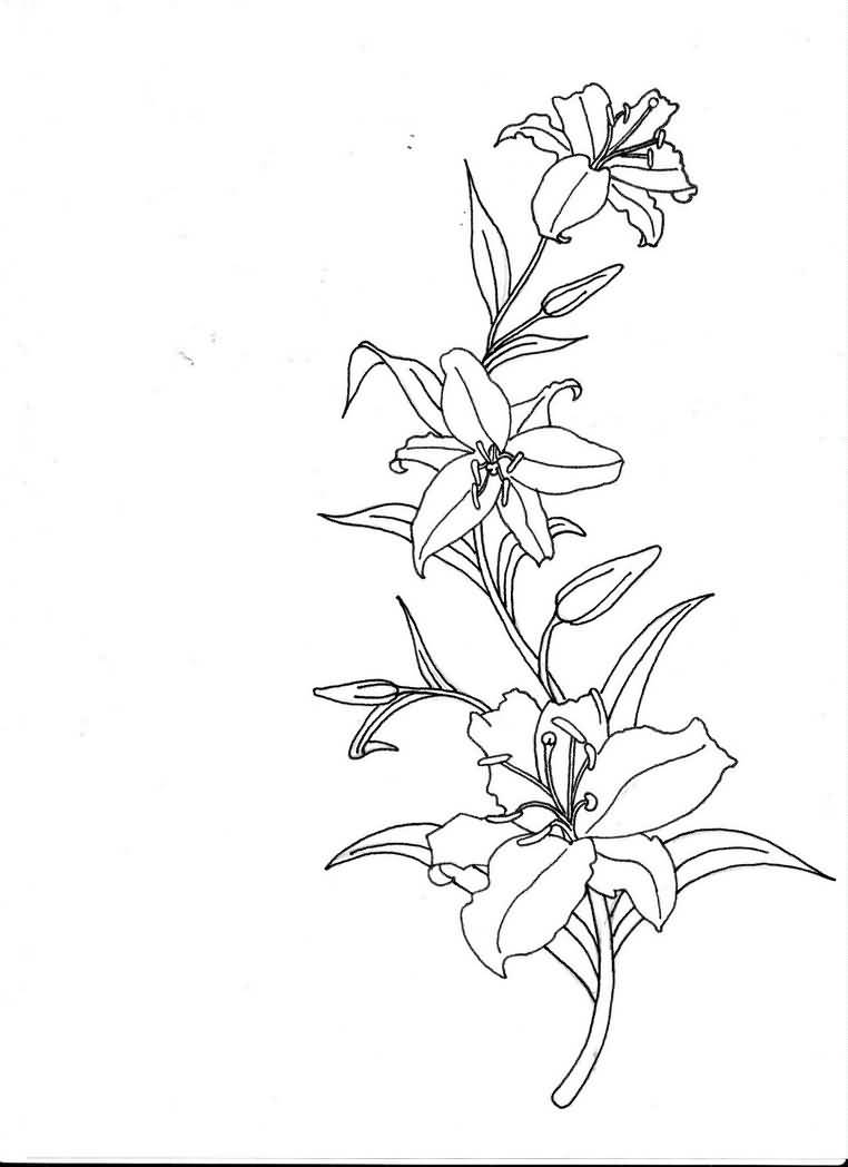 Lily Tattoo Line Drawing : Lily tattoo ideas and designs page