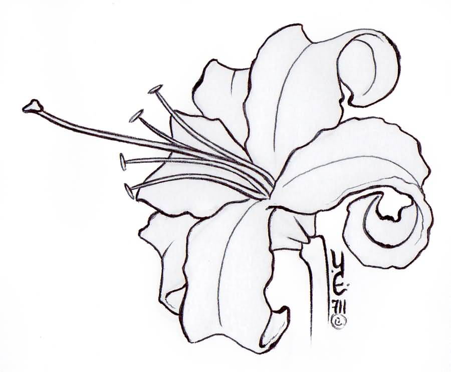 Lily Tattoo Line Drawing : Lily tattoo outline drawings sketch coloring page