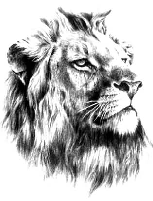 Great Lion Tattoo Sketch