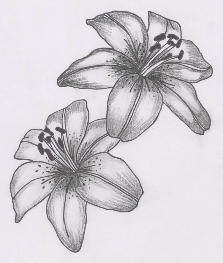 Lily flower tattoo pencil art tattooshunter lily flower tattoo pencil art izmirmasajfo