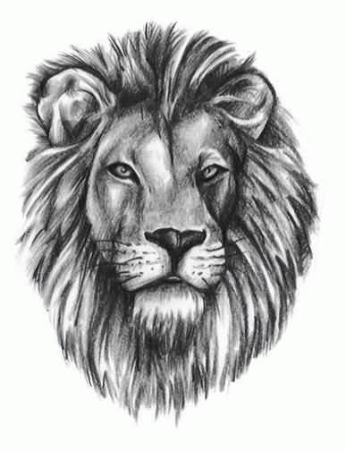 Realistic Lion Tattoo Sketch On Paper