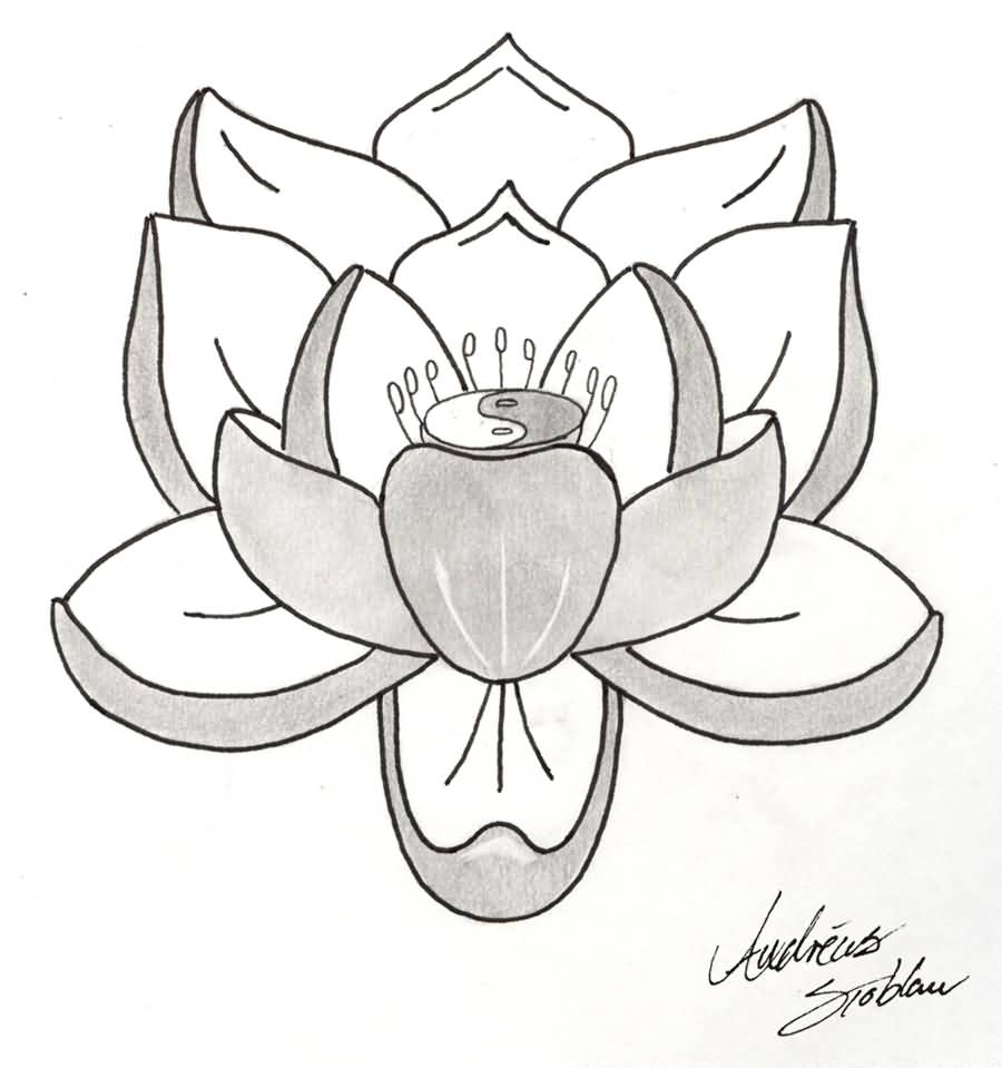 Simple lotus flower drawing tattoo flowers healthy lotus tattoo ideas and lotus tattoo designs page 20 izmirmasajfo