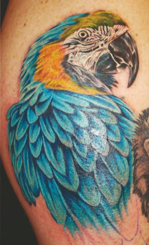 Beautiful Blue African Parrot Tattoo For Men's Sleeve