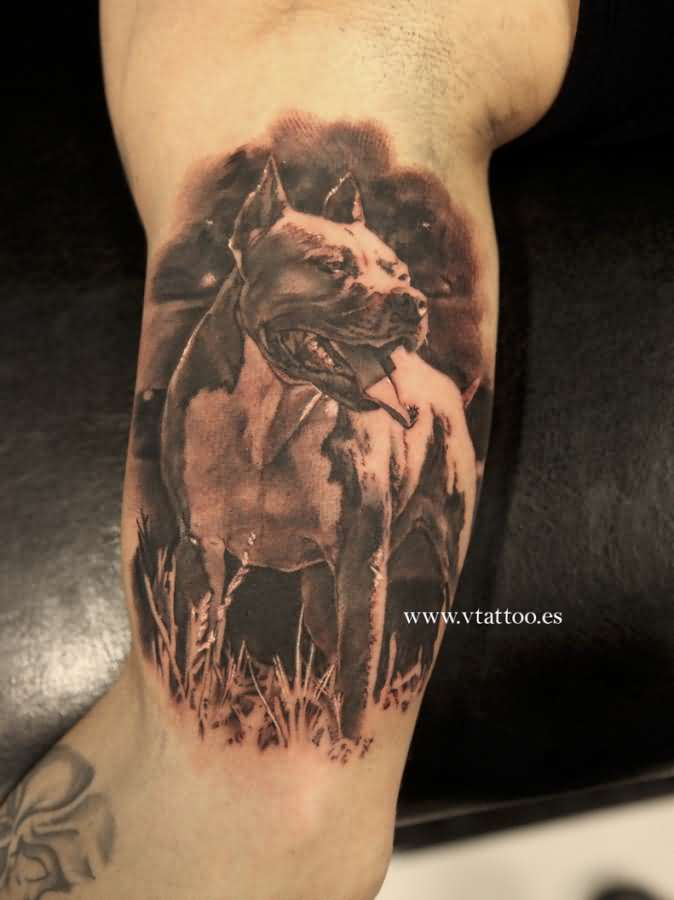 d3222d929ba9c Angry 3D Pitbull Tattoo On Half Sleeve