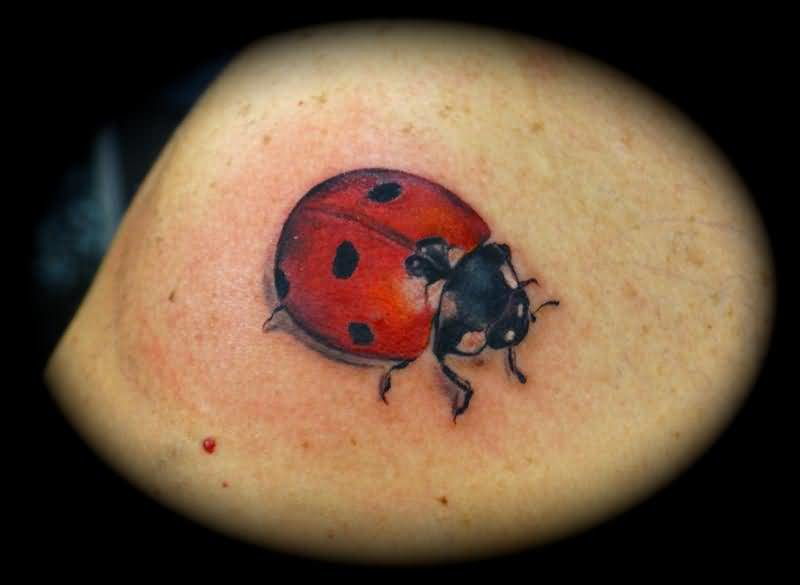 Mind Blowing Red  And Black Lady Bug Tattoo    3