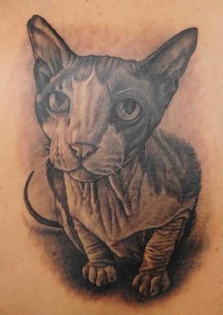 Popular Sphynx Cat Tattoo Design 2