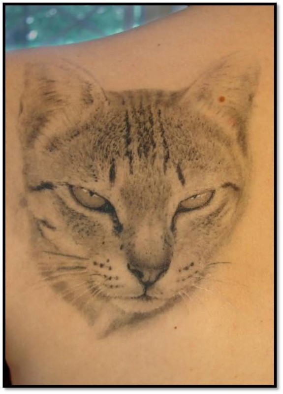 Realistic Cat Face Tattoo Design On Back Shoulder 5