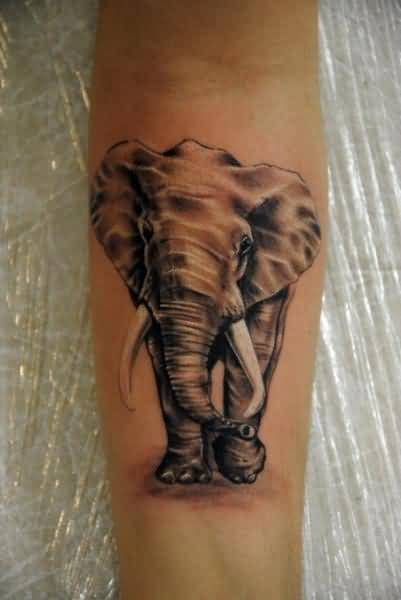 Marvelous Elephant Tattoo Design Made By Perfect Artist