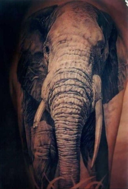 Ultimate Upper Sleeve Cover Up With  Brilliant Elephant Tattoo