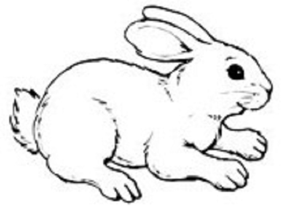 Lovely White Rabbit Tattoo Design Stencil