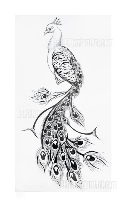 Classical Nice Black And Grey Ink Peacock Tattoo Design