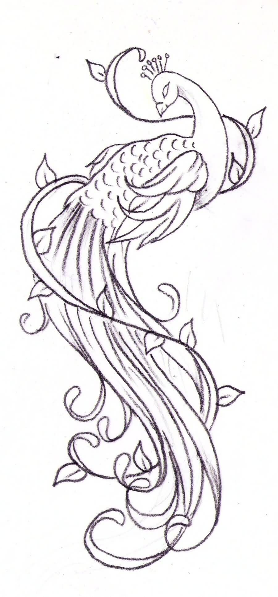 Peacock tattoo ideas and peacock tattoo designs page 2 for Cool tattoo stencils