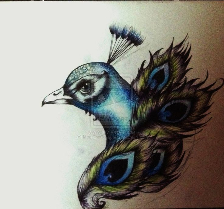 Fantastic Cool Peacock Face With Feather Tattoo Stencil Design