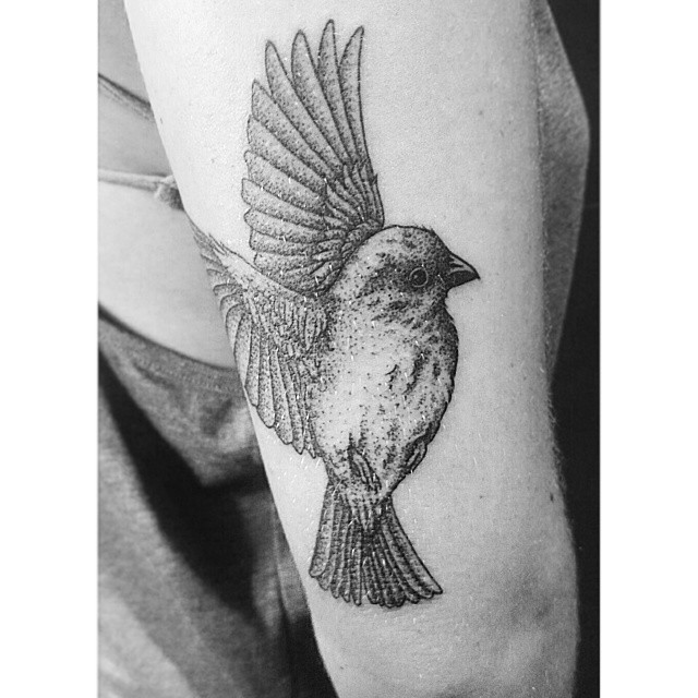 Flying Swallow Black And White Ink Bird Dotwork Tattoo
