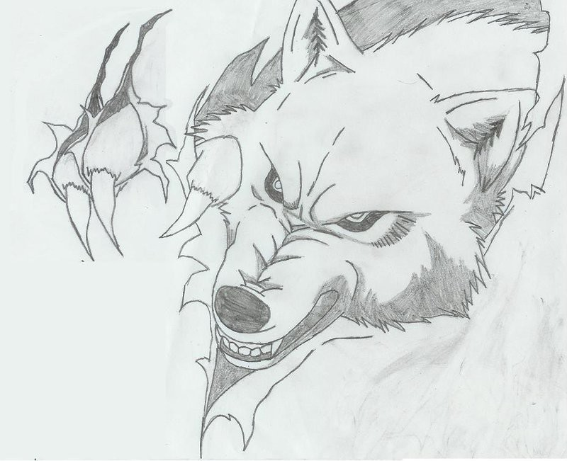 Ripped Skin Wolf Pencil Work Angry Wolf Face With Paw Tattoo Design
